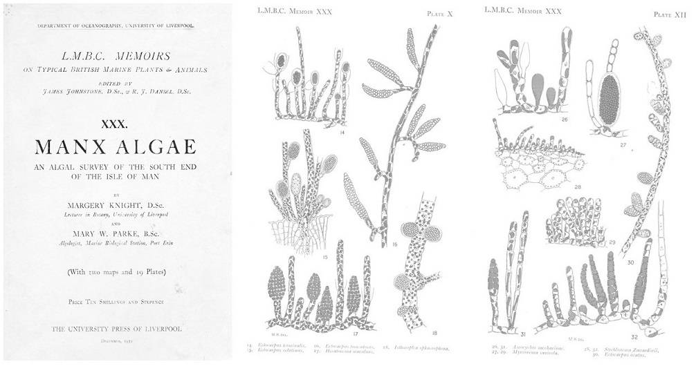 A botanical drawing depicting different types of algae found on Manx.