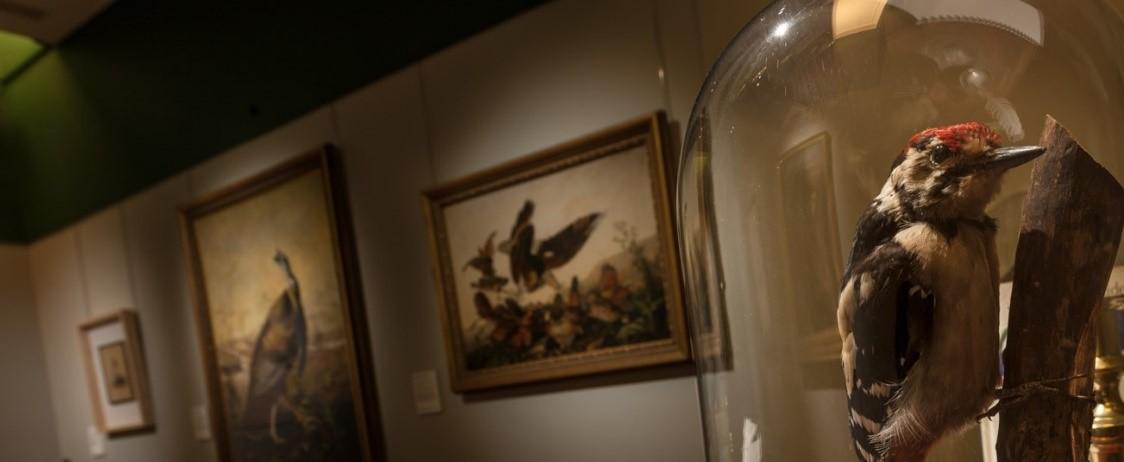 Audubon Gallery in the VG&M