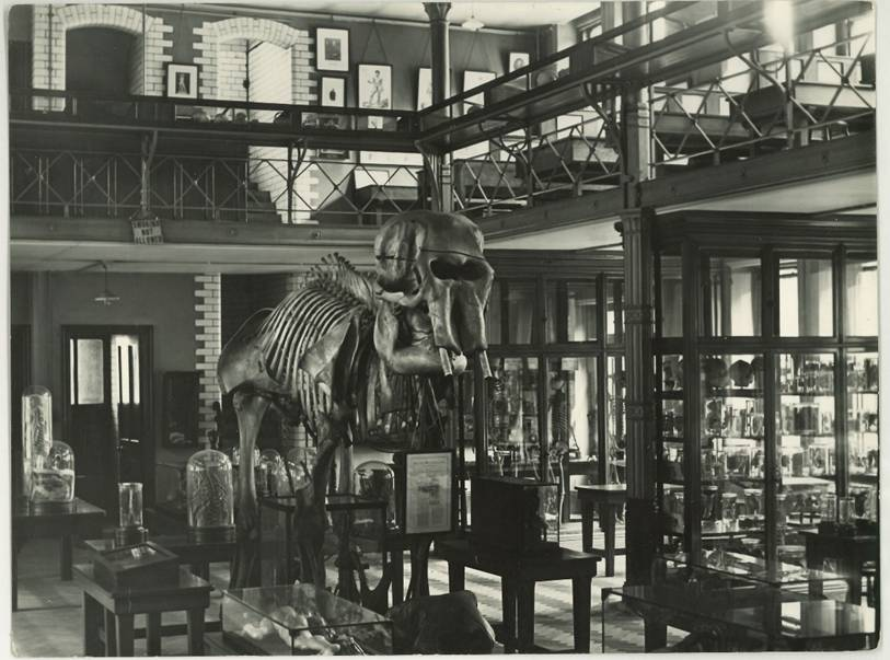 Black and white photograph of a comparative anatomy and zoology museum. There is a full size skeleton of an elephant surrounded by tables with glass bell jars and other specimens inside them. Surrounding the room is a balcony with table cases and specimens just seen.