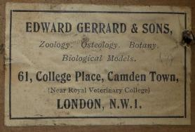 wo colour photographs of original labeling found on gerrards specimens. the labels have yellowed but are still readable and are titled Edward Gerrard & Sons.