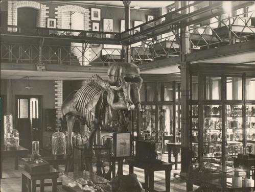 The Derby Building Museum of Anatomy and Zoology at the University of Liverpool.
