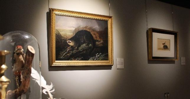 Audubon's Otter Caught in a Trap, 1826