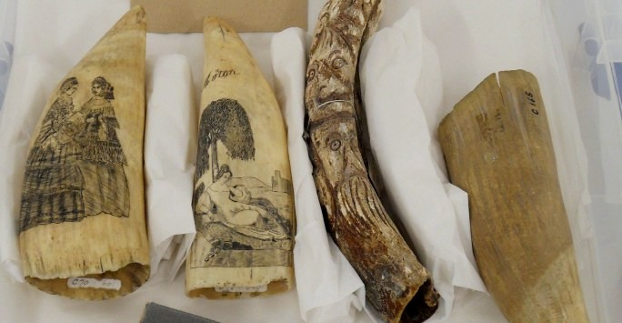 A box of  four engraved and carved scrimshaw whale bone and tusks
