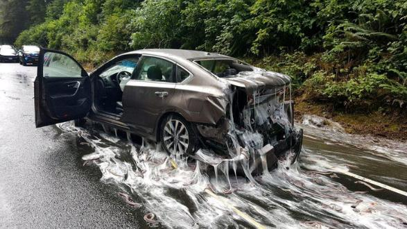 The unfortunate result for one driver when a lorry carrying hagfish shed its load in Oregon in 2017