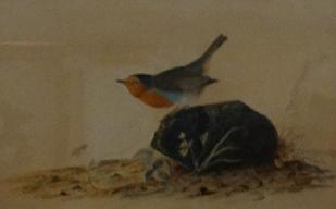 Audubon's Painting - 'A Robin Perched on a Mossy Stone'