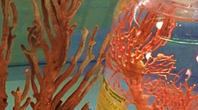 Coral samples from the exhibition 'Under the Sea'